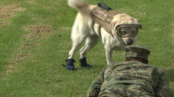 Famed Mexican rescue dog Frida retires after nine years' duty