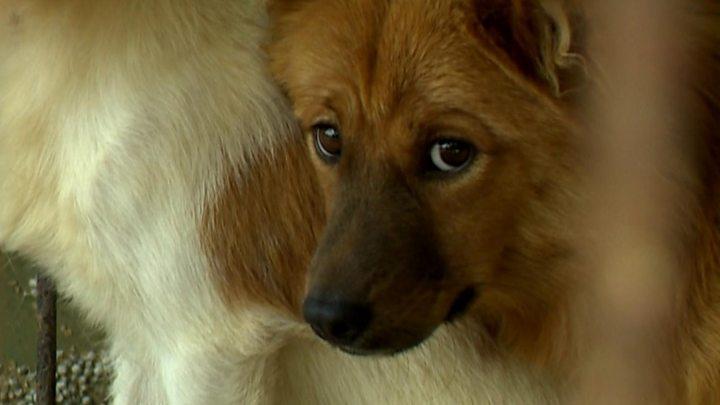 Nagaland dog meat: Animal rights groups hail ban as 'major turning point'
