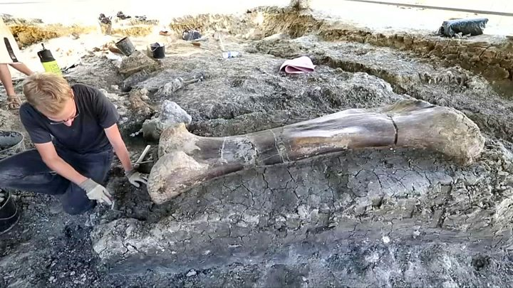 French Scientists Uncover Bone of Largest Dinosaur Ever