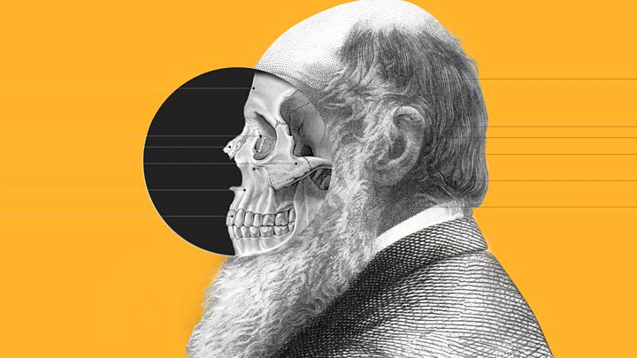 Teoria da Evolução: por que é errado dizer que viemos dos macacos e outras 4 questões sobre nossa origem
