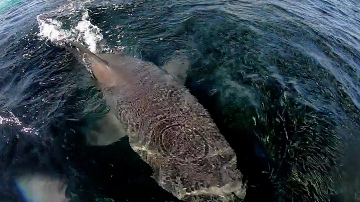 Surfer killed in great white shark attack off NSW coast