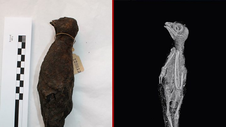 Scientists peer inside ancient Egyptian cat, snake and bird mummies