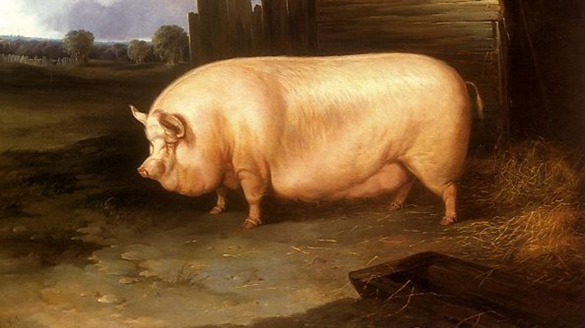 Why a pig is the last animal in the Chinese Zodiac - BBC