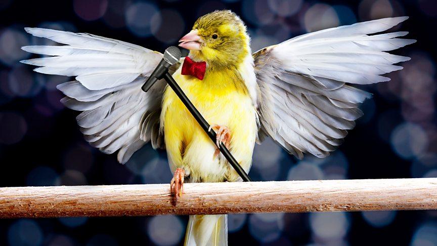 8 amazing duets between humans and birds