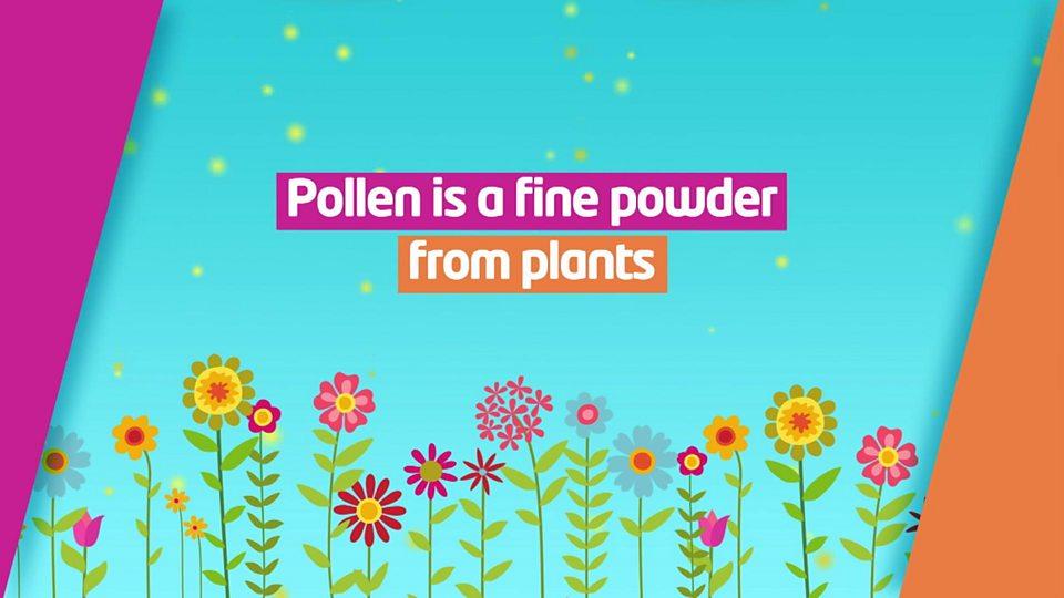 Hay fever: Tree 'pollen bomb' heading to UK - CBBC Newsround