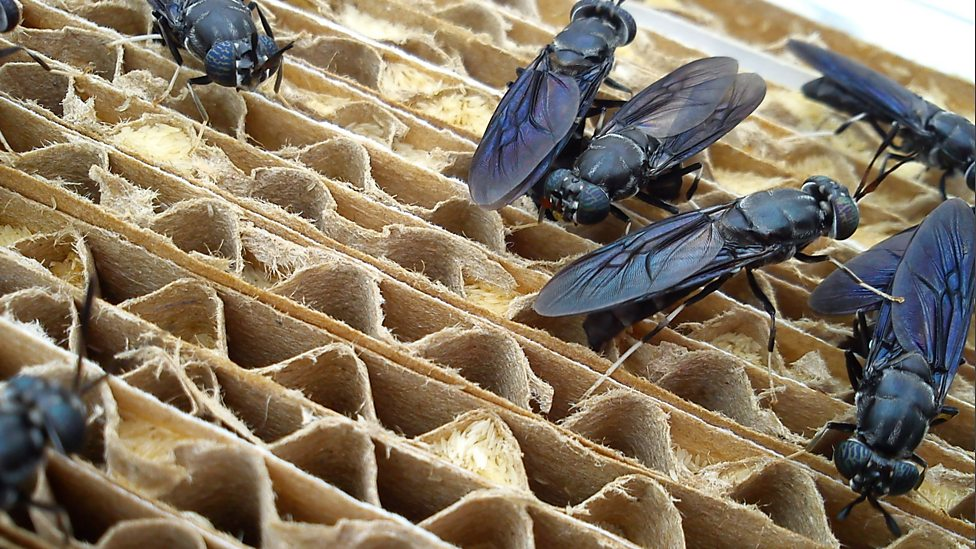 Image result for insect farming