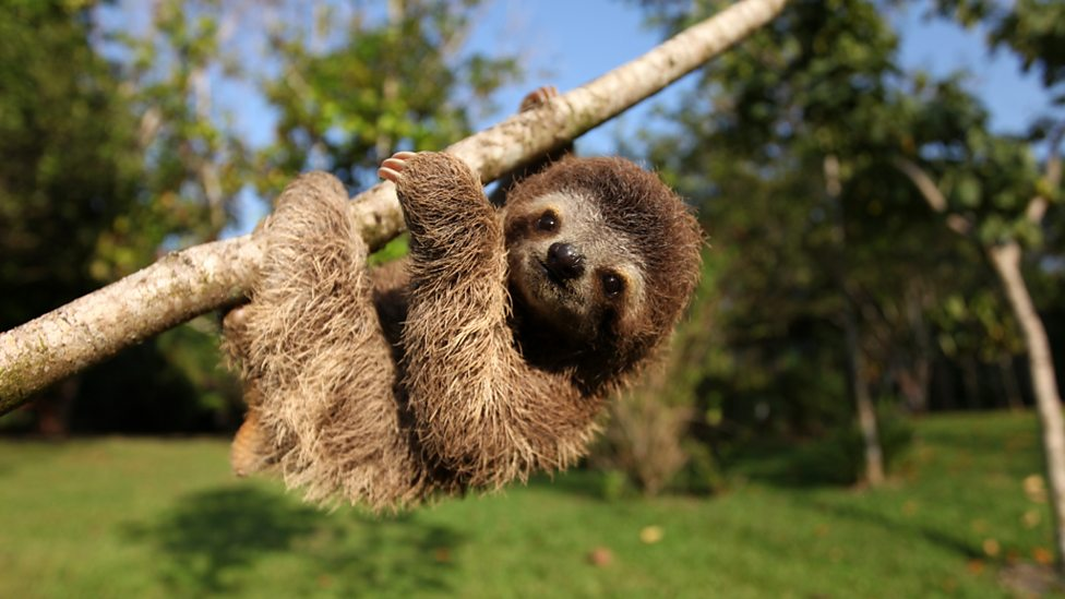 bbc one minnie the sloth hanging out nature s miracle orphans