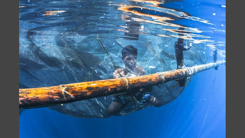 bbc two - bagan fishermen deploy nets at night and use lights to, Reel Combo