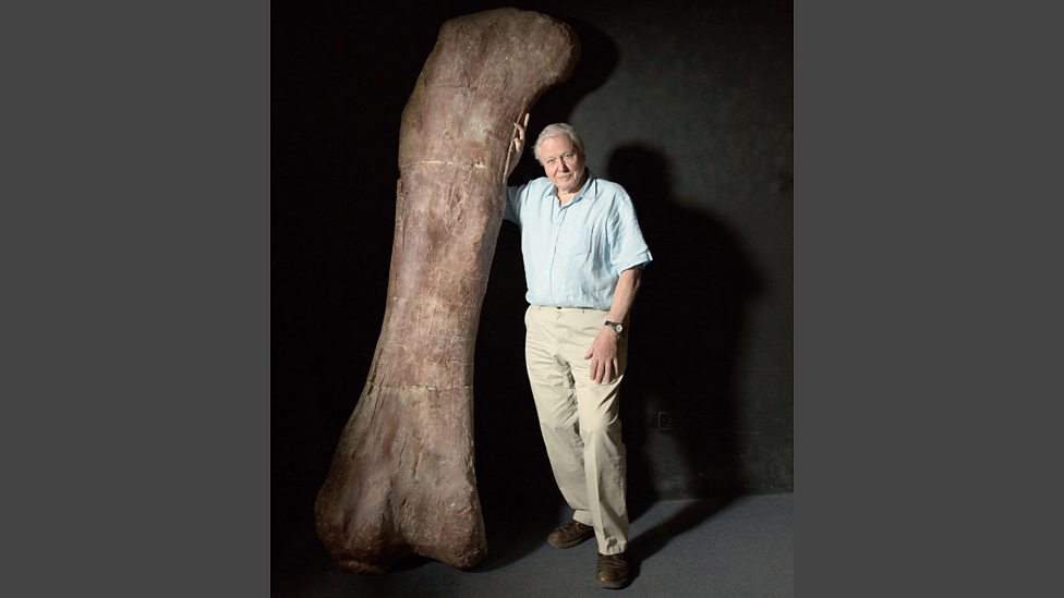 bbc one - an enormous thigh bone - attenborough and the giant, Human Body