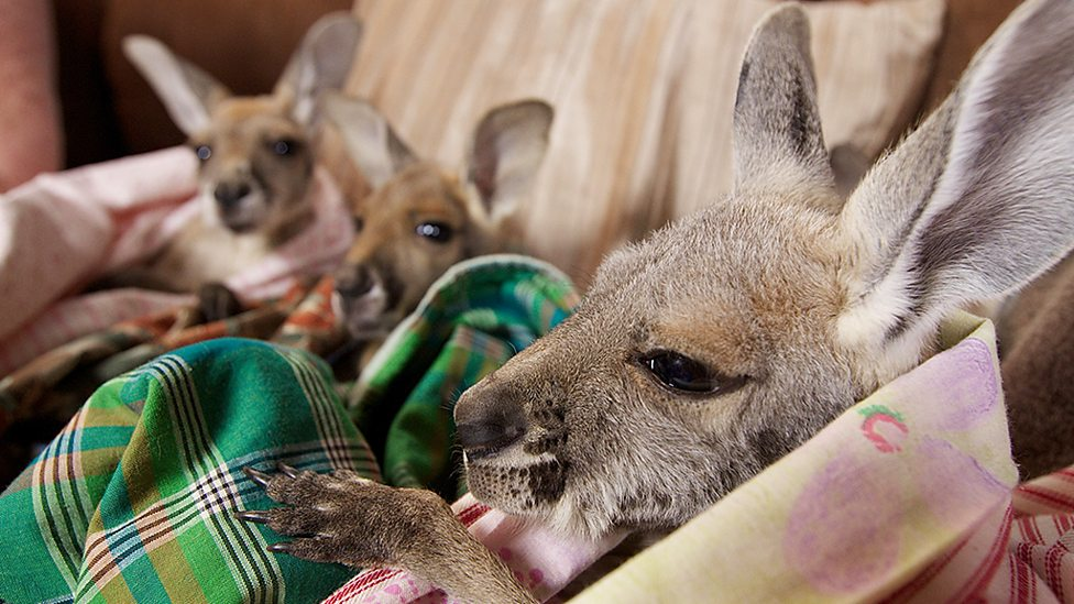 Kangaroo pillow pouches