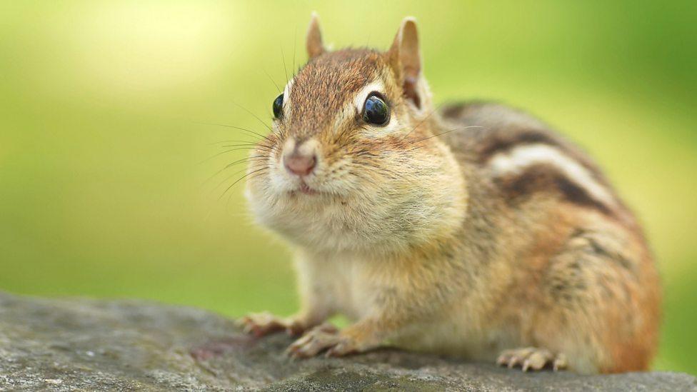 bbc one chipmunk earth s seasonal secrets autumn the stars of
