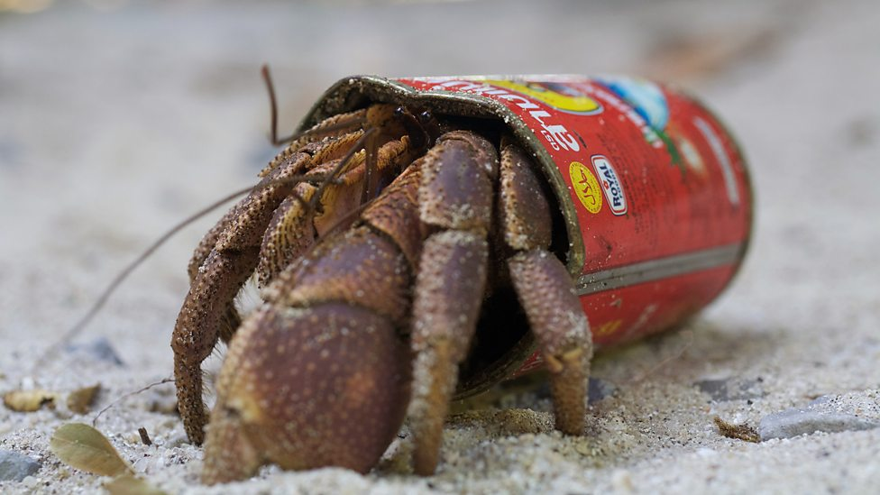 bbc two hermit crab thailand earth s tropical paradise the