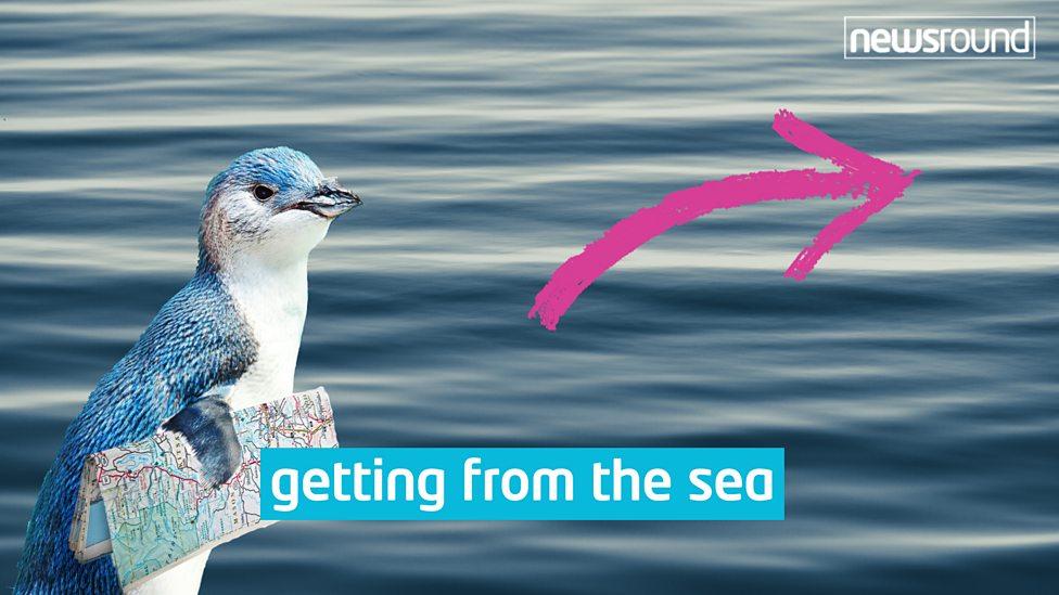 P-p-penguin pipeline gives them a lifeline
