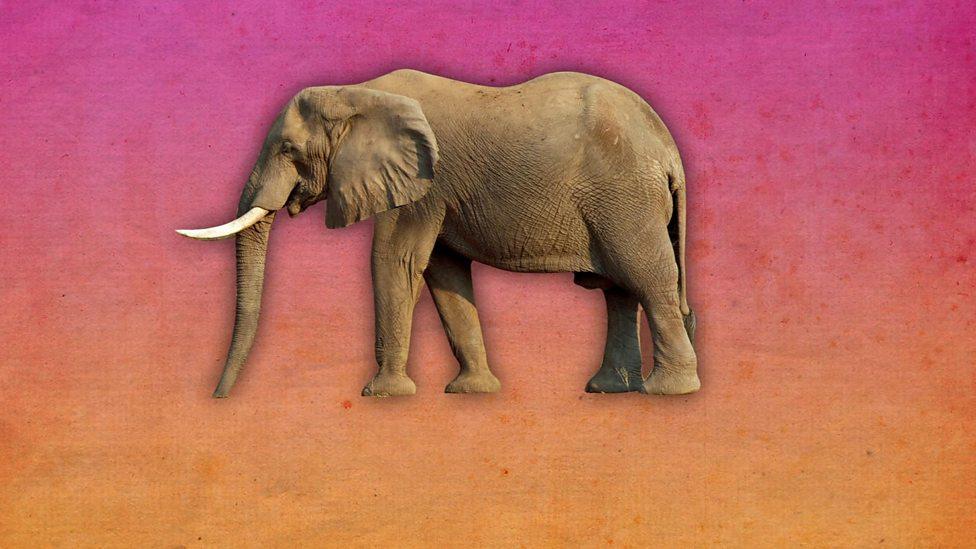 How long do elephants spend sleeping?