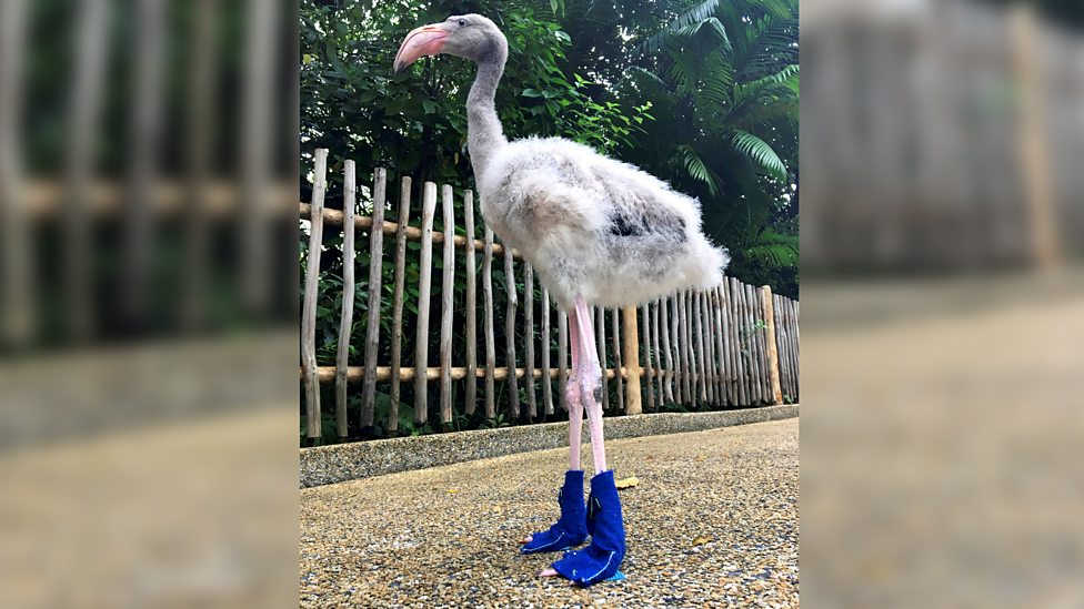 These flamingo boots were made for walkin'!
