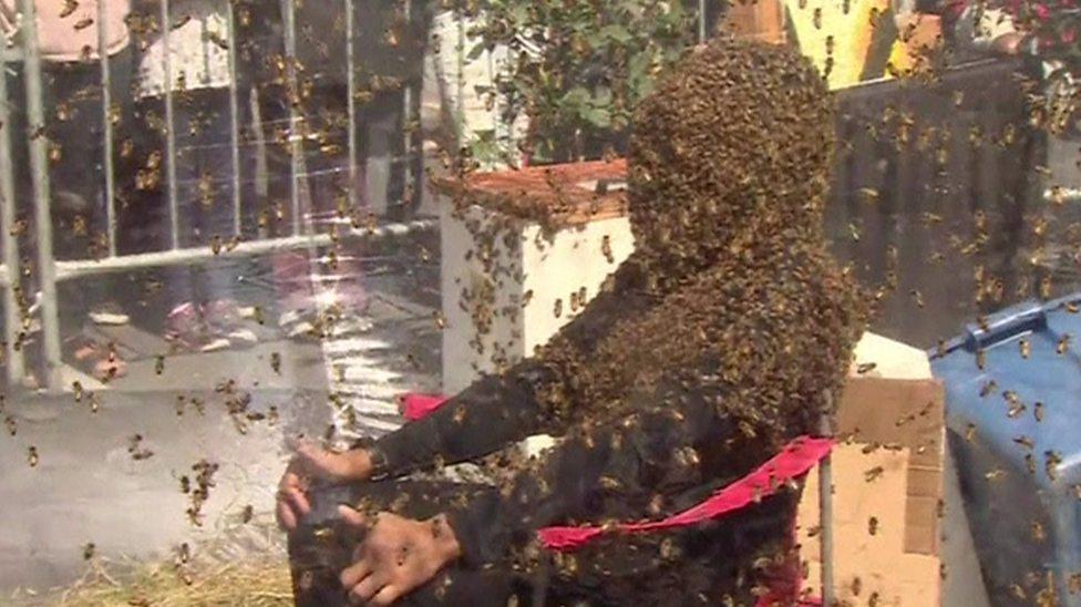 Man breaks world bee beard record
