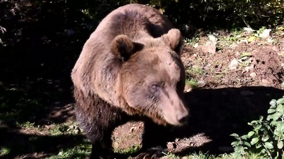 Brown cubs get a beary nice new home