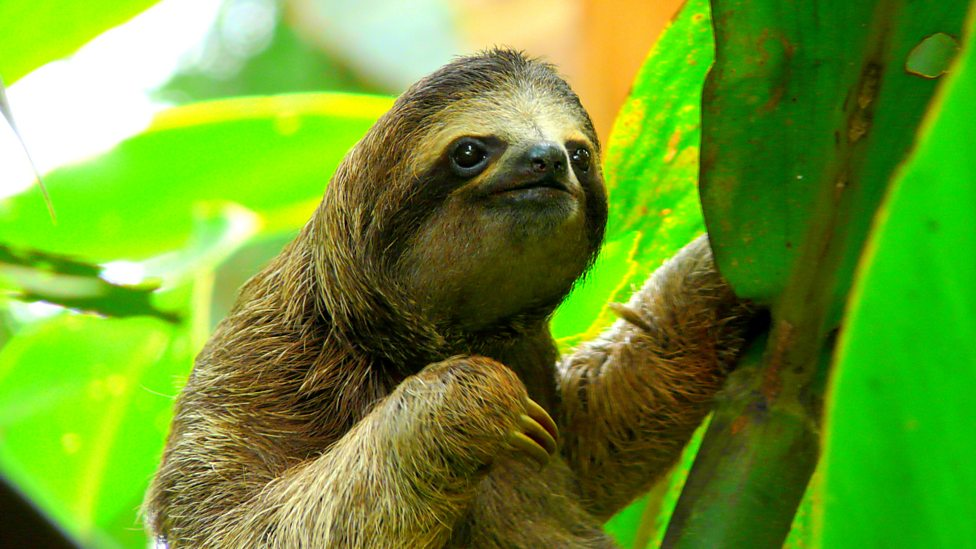 bbc radio 4 the power of sloth why we should all live like a sloth