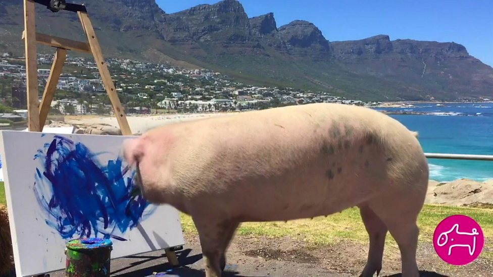 Pigcasso: The animal artist superstar