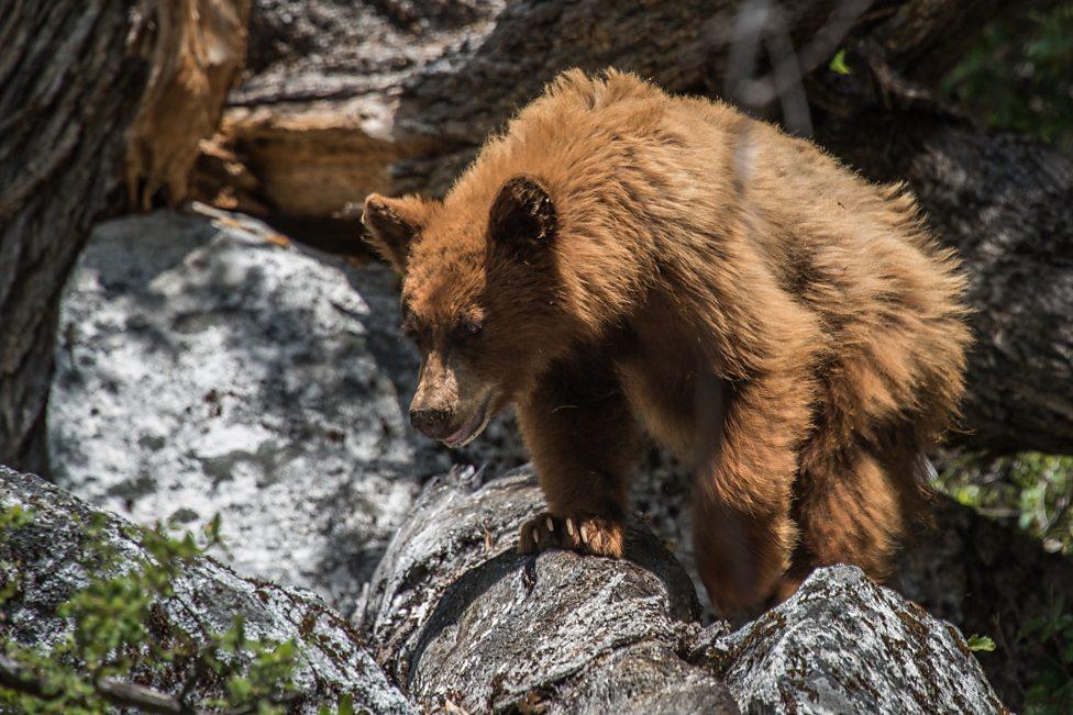 I saw a bear.....where???