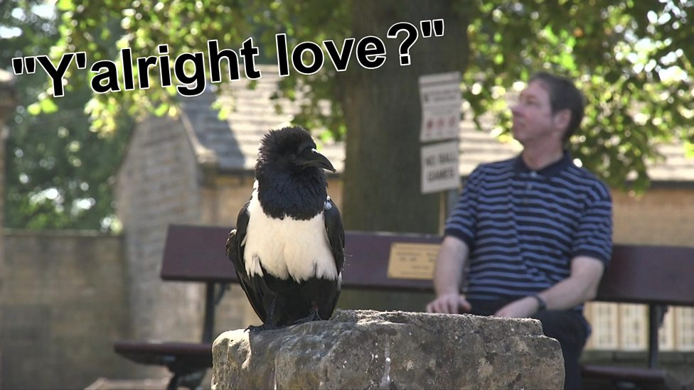 The talking bird: 'Y'alright love?'