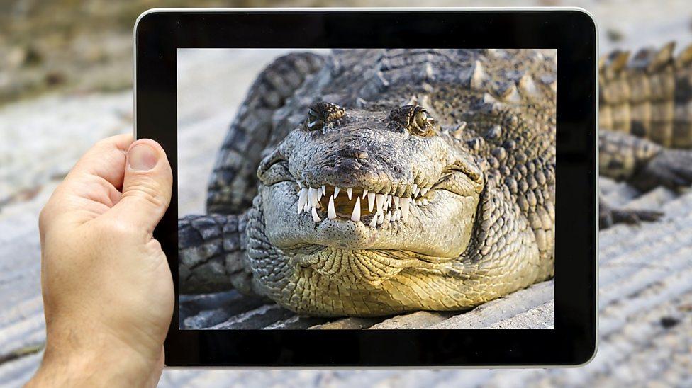 Top tips for taking wild animal photos