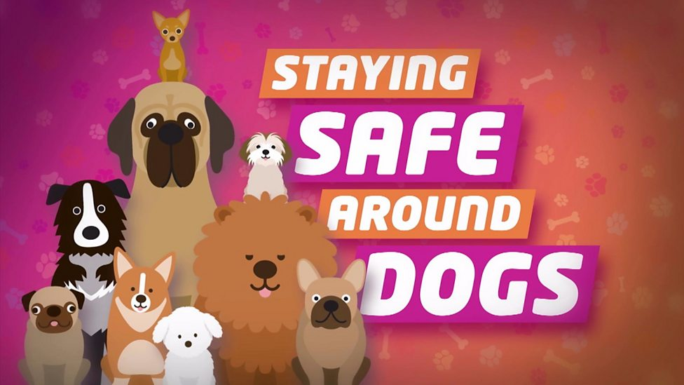 Top tips for staying safe around dogs