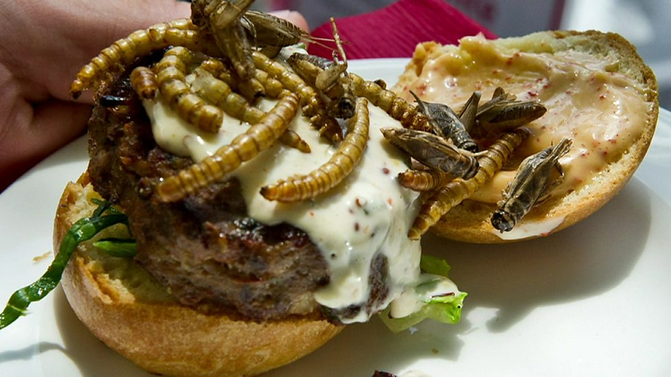 Insects: Would you eat a plateful of these?