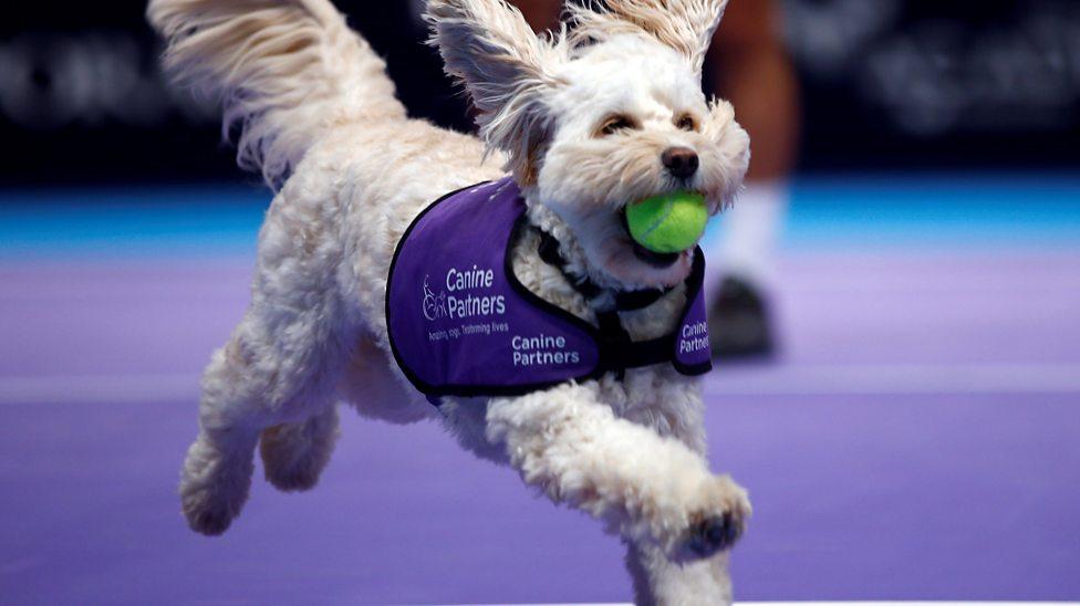 Meet the tennis ball dogs!