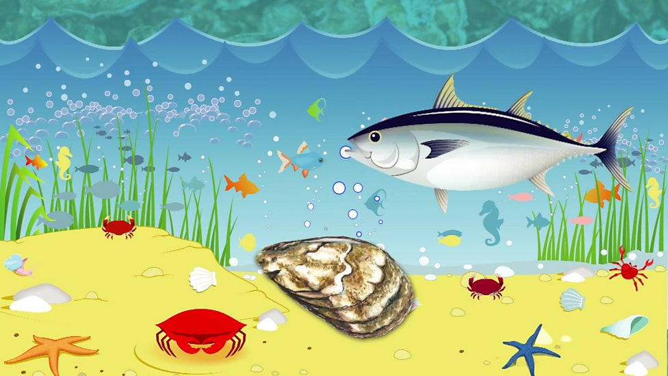 Why are oysters so important to the sea environment?