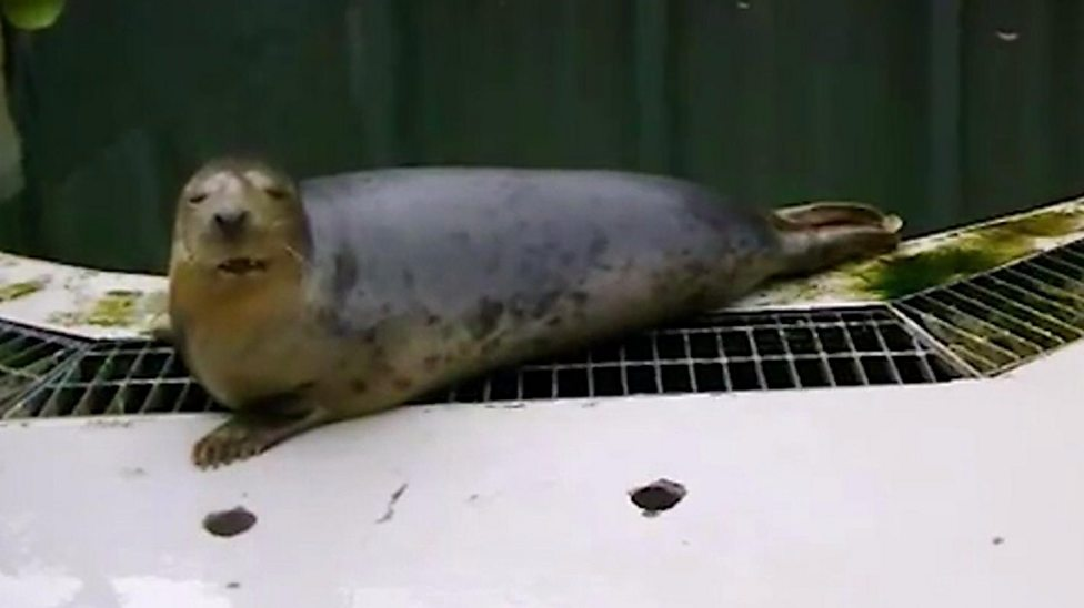 This seal sings Star Wars and Twinkle Twinkle Little Star