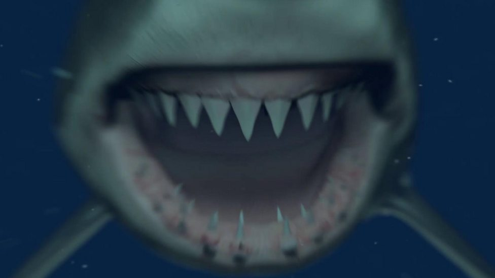 The Big Question: Why do sharks have sharp teeth?