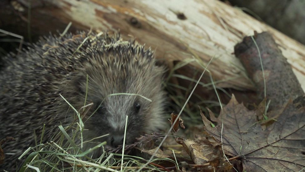 Top tips for looking after wildlife this Bonfire Night