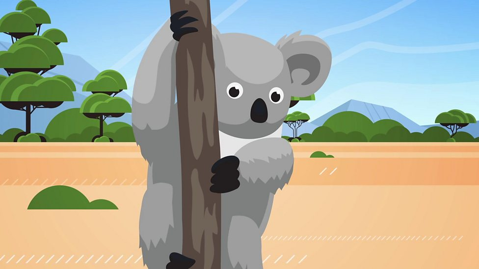 How much do you know about koalas?