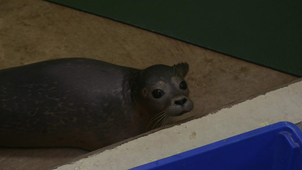 How rescued seal pups are cared for