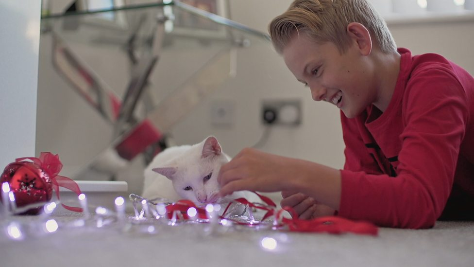 How can microchips help reunite lost cats with their owner?