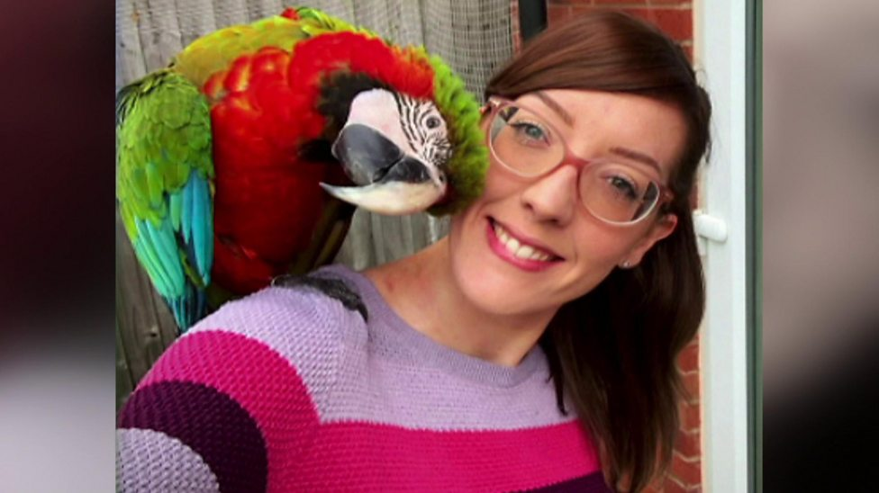 Meet the multi-coloured Macaw who's a social media hit