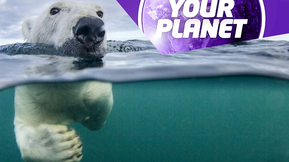 Your Planet: Environment and nature