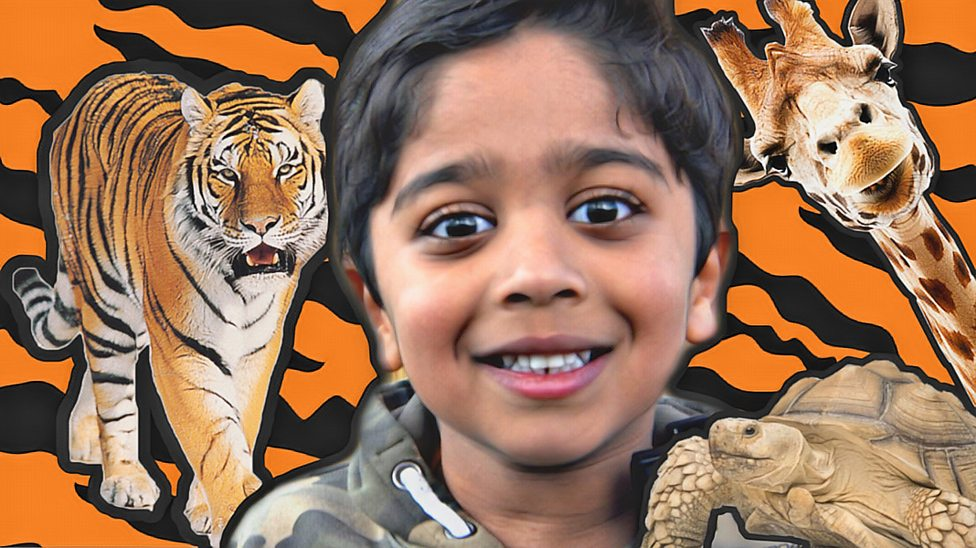 Six-year-old joins BBC on safari tour as zoos reopen