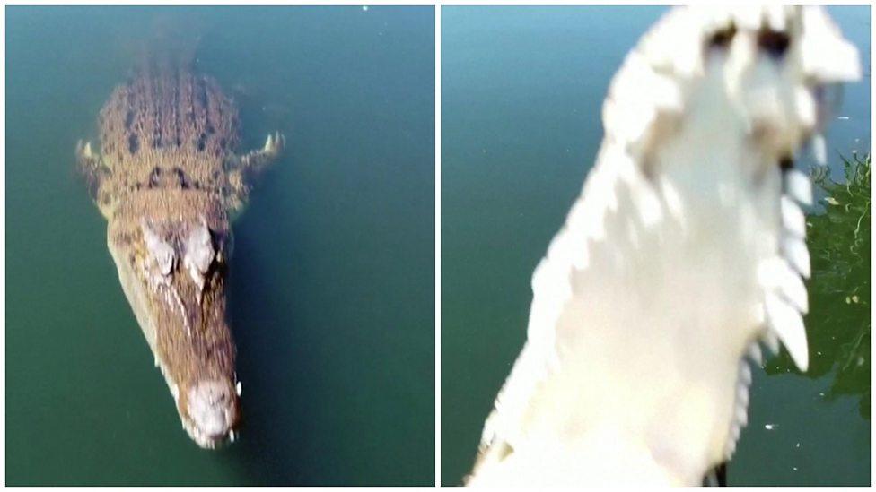 Crocodile vs Drone! Who wins?