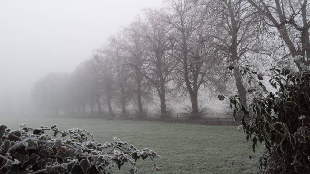 Frozen trees on Worcester racecourse