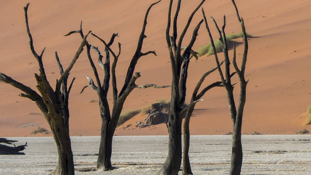 The dry landscape of Deadvlei, in Namibia