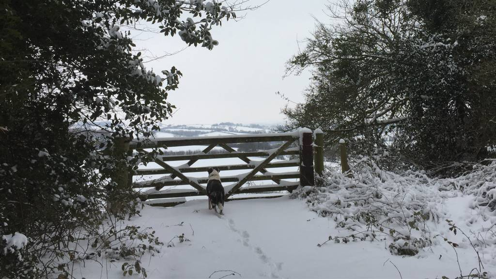 A snowy scene with a dog in front of a gate