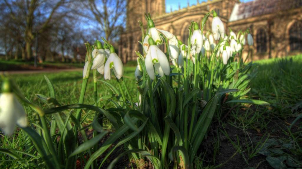 Snow drops in Loughborough