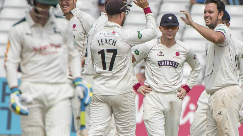 Somerset's players celebrate a wicket
