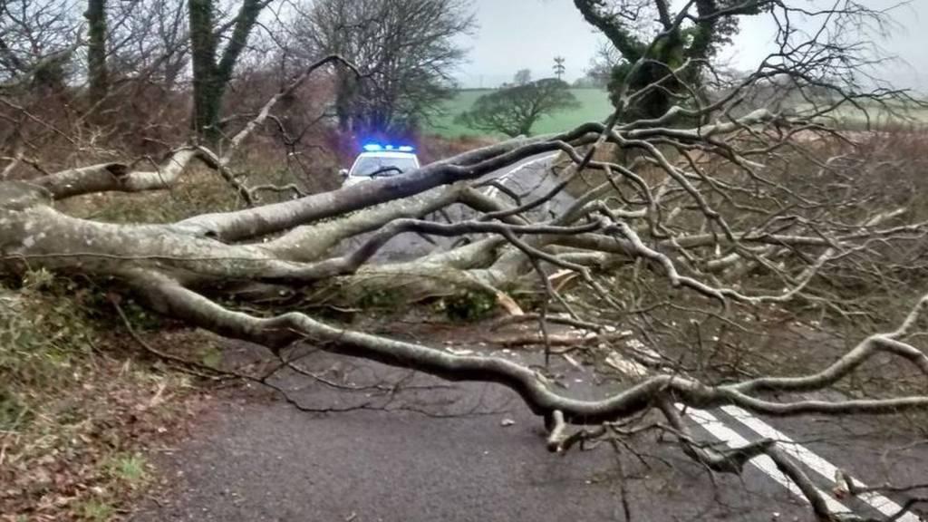 Fallen tree on A379. Pic: Sgt Steve Cayless