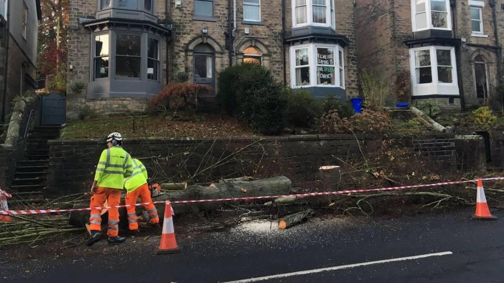 Trees felled in Sheffield