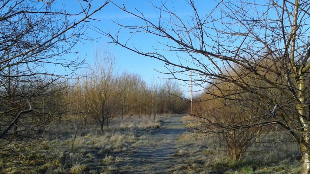 Trees near Histon