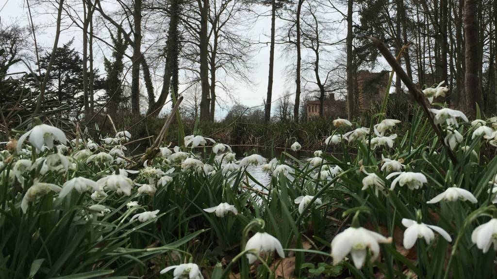 Snowdrops at Oxburgh Hall