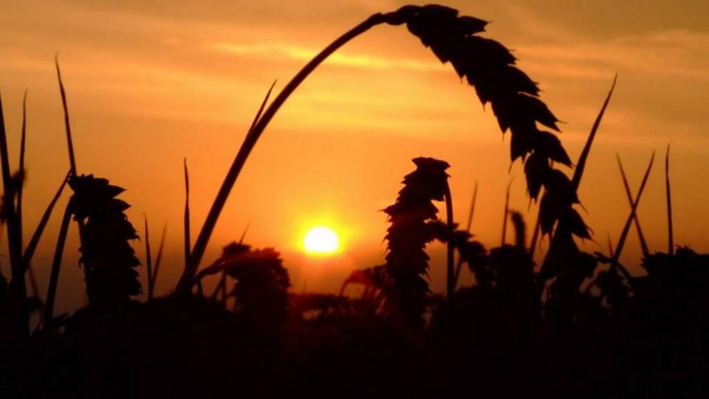 Bury St Edmunds sunset